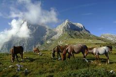 Weidende paarden op berg Royalty-vrije Stock Foto's