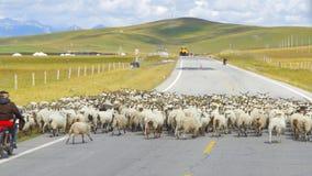 Weidende schapen en royalty-vrije stock afbeelding