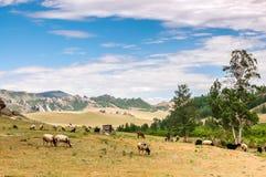 Weidende schapen en geiten op weidelandschap Royalty-vrije Stock Foto's