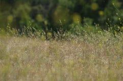 Weidengebieden Royalty-vrije Stock Fotografie