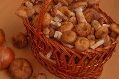 Weidenkorb angefüllt mit Pilzen stockfotografie
