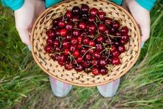 Weidenkorb gemacht von der Rebe mit roter reifer Kirsche auf Grashintergrund Lizenzfreie Stockfotos