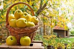 Weidenkorb mit gelben Äpfeln Lizenzfreie Stockbilder