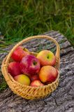 Weidenkorb mit hellen roten Äpfeln steht auf einem hölzernen Plattform aga Lizenzfreies Stockfoto