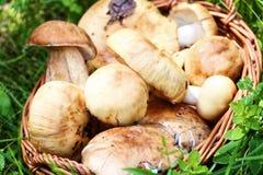 Weidenkorb voll der Pilze Lizenzfreies Stockbild