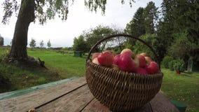 Weidenkorb voll von reifen Äpfeln auf Tabelle draußen, Zeitspanne 4K stock video