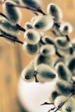 Weidenniederlassung mit Weidenkätzchen im weißen Vase Lizenzfreies Stockfoto