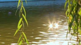 Weidenniederlassungen hängen am Hintergrund des Wasser grellen Glanzes vom Wasser stock footage