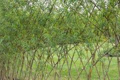 Weidenzaun im Garten Stockfotos