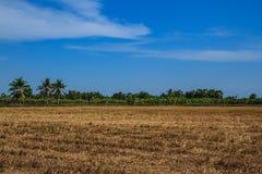 Weidesbraun unter blauem Himmel Stockfotografie