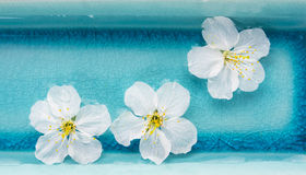 Weiße Blumen in der blauen Schüssel Wasser, Badekurort, Fahne Stockbilder
