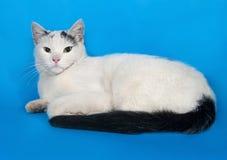 Weiße Katze mit schwarzen Flecken liegt auf Blau Lizenzfreies Stockfoto