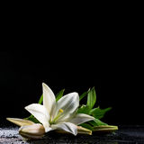 Weiße Lilie auf Schwarzem Lizenzfreie Stockfotos