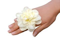 Weiße Narzisse auf der Frauenhand getrennt Lizenzfreies Stockbild