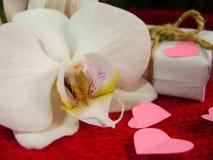 Weiße Orchidee und Geschenkbox auf einem roten Hintergrund, Valentinsgruß-Tageshintergrund Kleine Papierherzen Stockbild