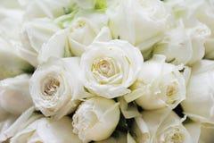 Weiße Rosen Stockfotos