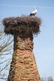 Weiße Störche im Nest Lizenzfreie Stockbilder
