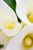 Weißer Calla Lily Wedding Flower Bouquet Lizenzfreie Stockfotos