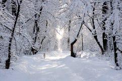 Weißer Hund in der schneebedeckten Parkgasse des Winters Stockbilder