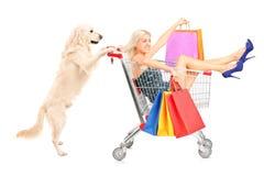 Weißer Retrieverhund, der eine Frau mit Einkaufstaschen in einem Wagen drückt Stockbilder