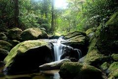 Weißer Stromwasserfall im dunklen Wald mit Moos Lizenzfreie Stockfotos