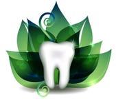 Weißer Zahn und hellgrüne Blätter Stockbild