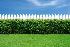 Weißer Zaun und grünes Gras Stockbilder