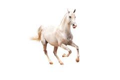Weißes Pferd auf Weiß Stockbild