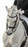 Weißes Pferd Dressage Lizenzfreies Stockfoto