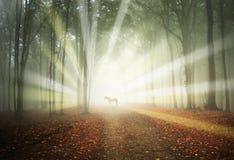 Weißes Pferd in einem magischen Wald mit Sonne rays Stockfotos