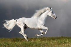 Weißes Pferd läuft auf den dunklen Himmelhintergrund Lizenzfreie Stockfotos