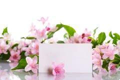 Weigel beautiful blooming flowers Royalty Free Stock Photo