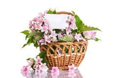 Weigel beautiful blooming flowers Royalty Free Stock Image