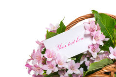 Weigel beautiful flowers in a basket Royalty Free Stock Photography