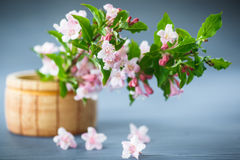 Weigel beautiful pink flowers Stock Images
