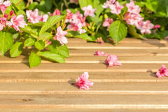 Weigel flowers on the garden table close up Stock Images