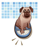 Weighing. A Bulldog weighing on scales Stock Image