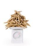 Weighing of grain Stock Image