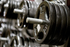 Weight dumbbell in a gym Stock Photography