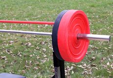 Weight lifting in the outdoor gym on the lawn Royalty Free Stock Photos