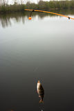Weighted line (for bottom-fishing). A series: fishing on weighted line, a photo of  catch Royalty Free Stock Photography
