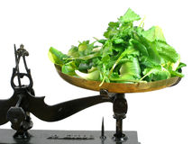 Weighting salad. Green salads and rocket on a scale tray stock photos