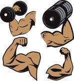Weightlifter-Arme lizenzfreie abbildung