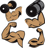 Weightlifter Arms Stock Image
