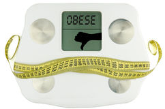 Weightscale with tape measure bow . fat Stock Images