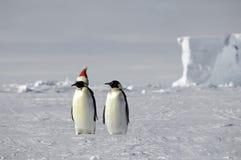 Weihnachten auf Eis Stockfotografie
