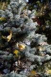 Weihnachten-Baum im Herbst Lizenzfreie Stockfotos
