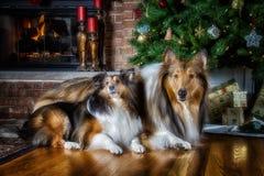 Weihnachten betriebsbereit Stockfotos