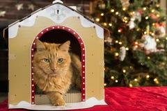 Weihnachten Cat House Lizenzfreie Stockfotos