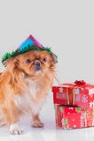 Weihnachten - Hund des neuen Jahres Lizenzfreie Stockfotos